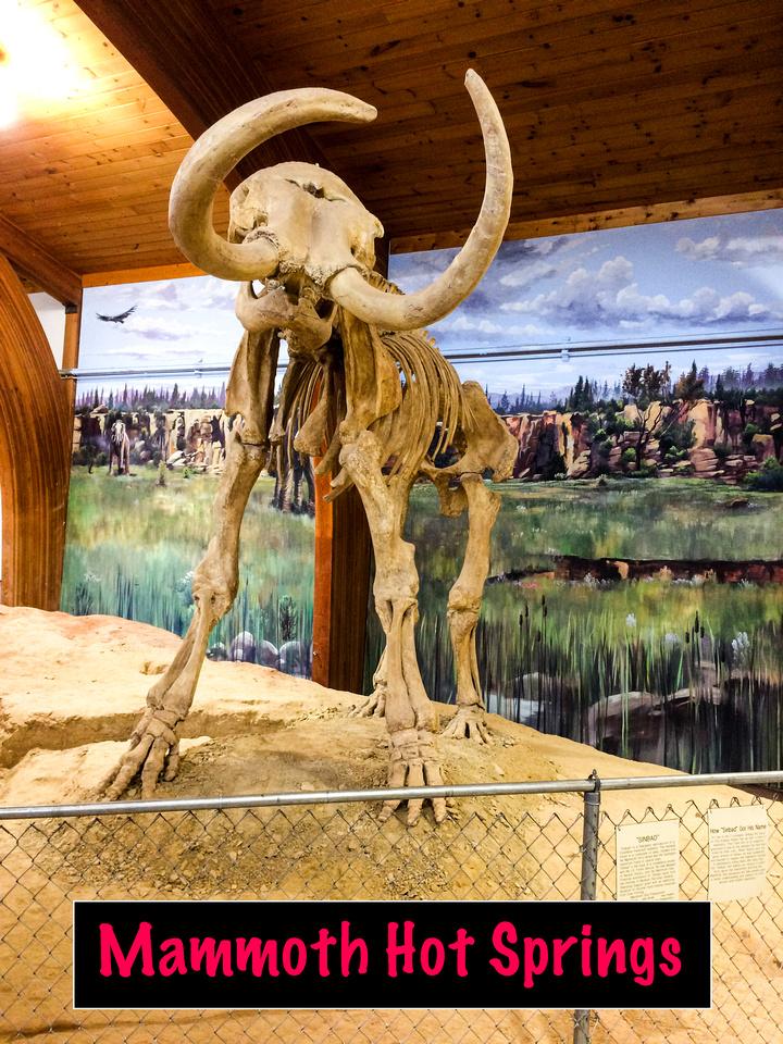 Mammoth-103