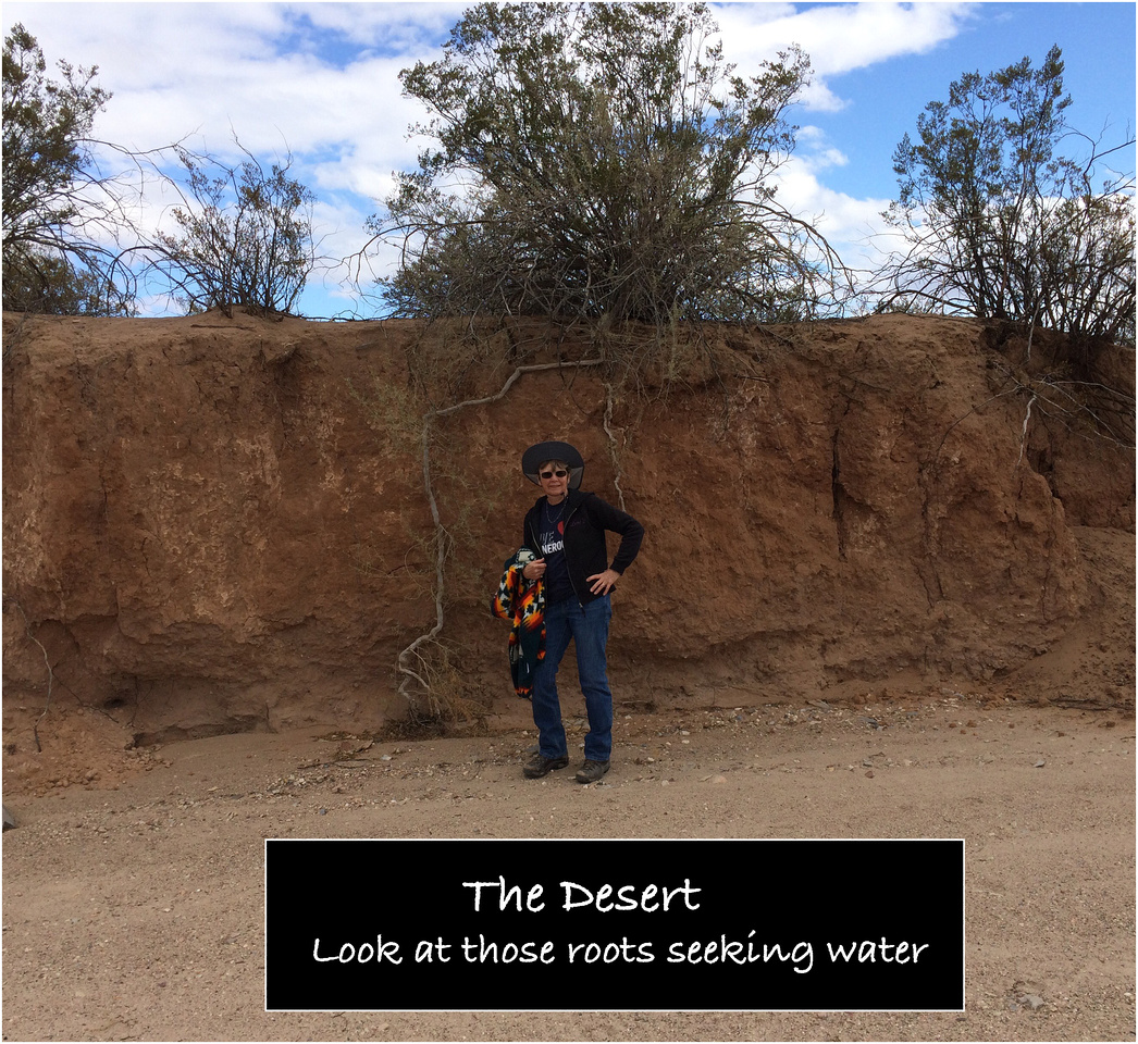 Desert_Roots
